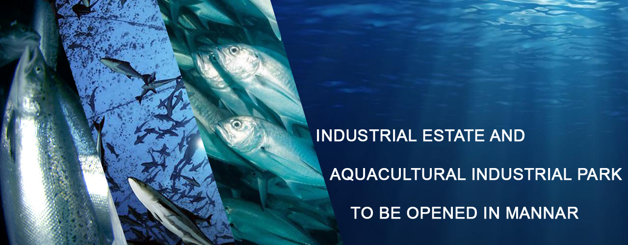 Industrial Estate and Aquacultural Industrial Park to be opened in Mannar