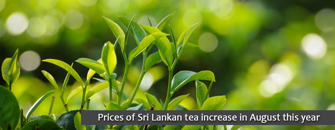 Prices of Sri Lankan tea increase in August this year