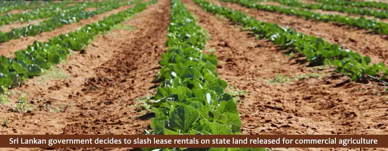 Sri Lankan government decides to slash lease rentals on state land released for commercial agriculture