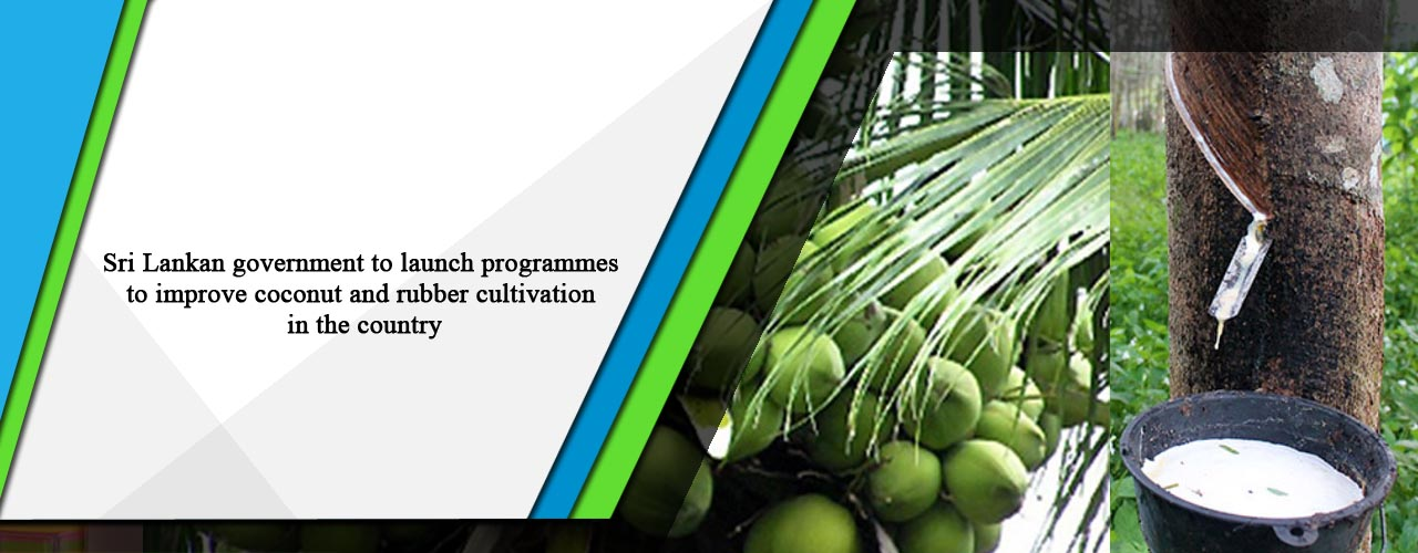 Sri Lankan government to launch programmes to improve coconut and rubber cultivation in the country