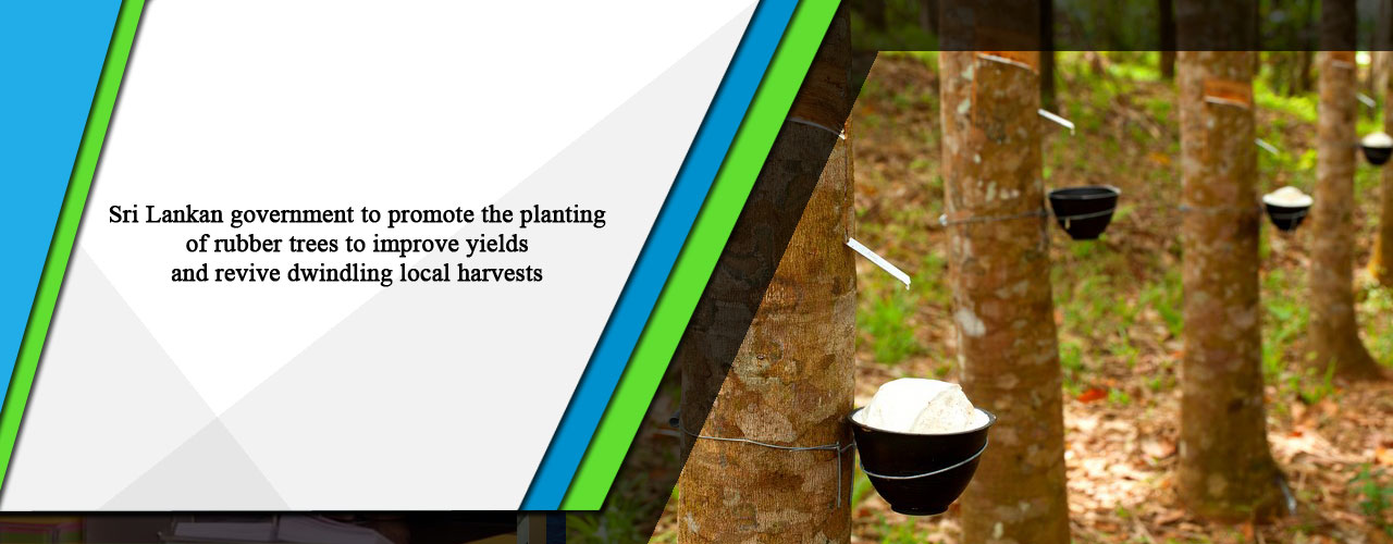 Sri Lankan government to promote the planting of rubber