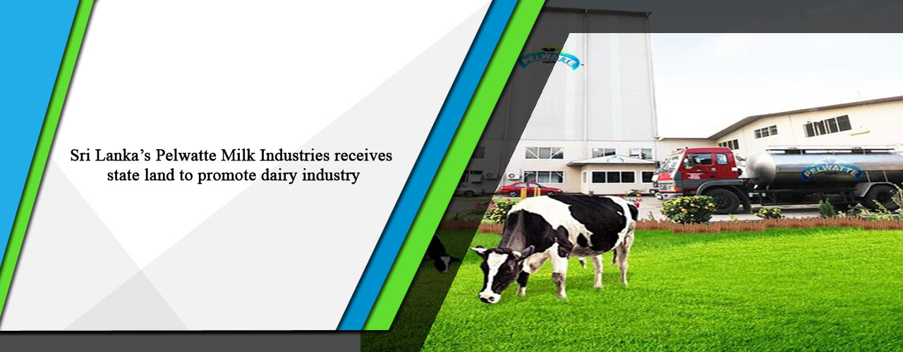 Sri Lanka's Pelwatte Milk Industries receives state land to promote dairy industry