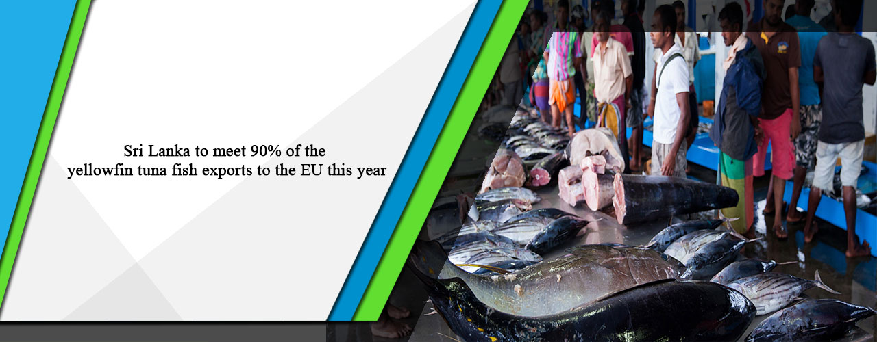 Sri Lanka to meet 90% of the yellowfin tuna fish exports to the EU this year