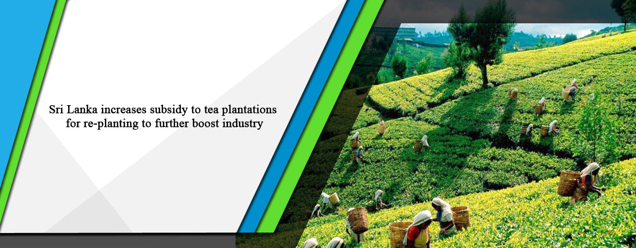 Sri Lanka increases subsidy to tea plantations for re-planting to further boost industry