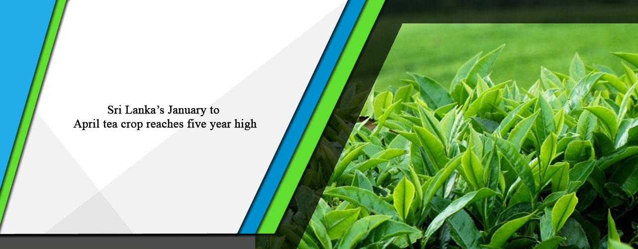 Sri Lanka's January to April tea crop reaches five year high