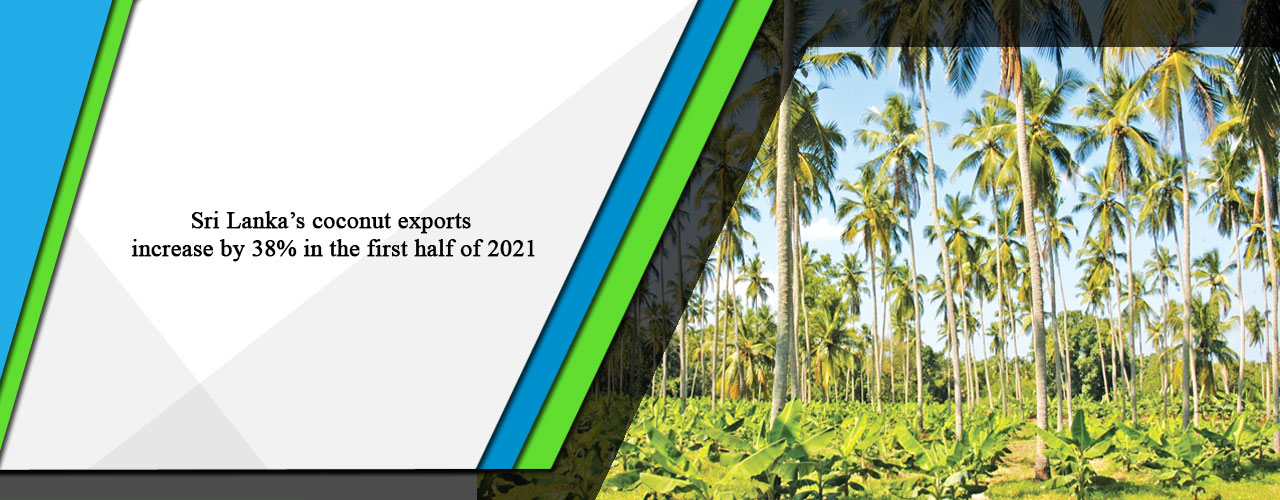 Sri Lanka's coconut exports increase by 38% in the first half of 2021