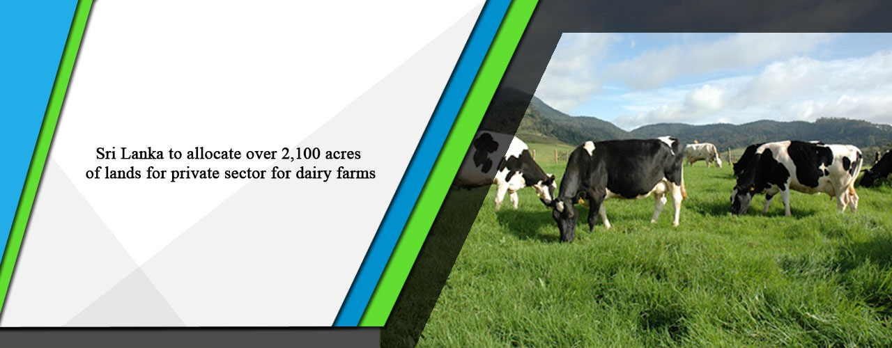 Sri Lanka to allocate over 2,100 acres of lands for private sector for dairy farms
