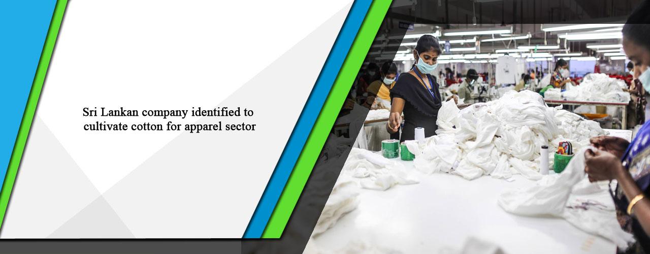 Sri Lankan company identified to cultivate cotton for apparel sector