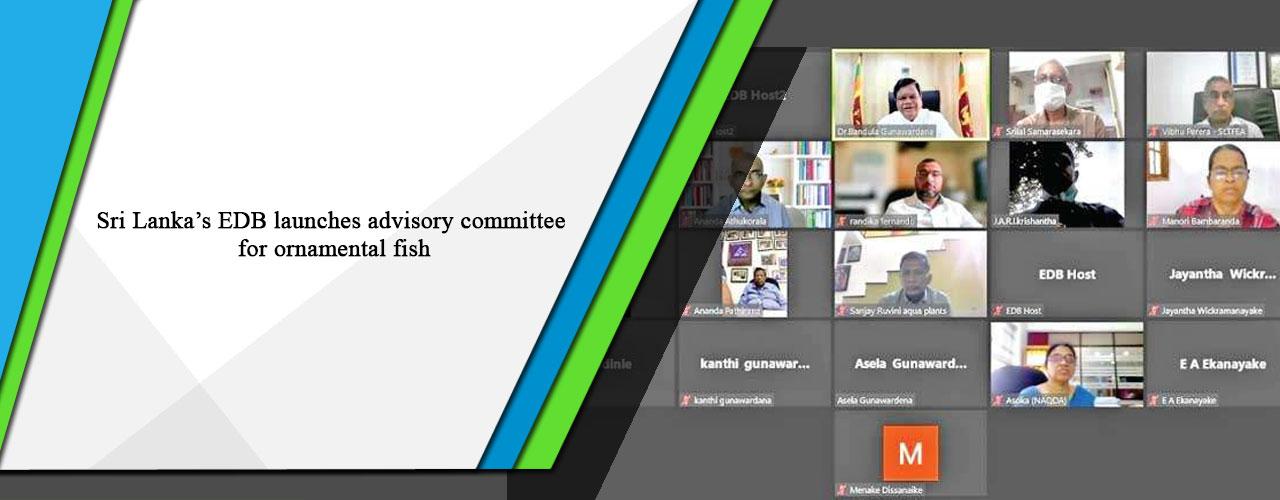 Sri Lanka's EDB launches advisory committee for ornamental fish